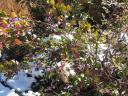 flowersinsnow.jpg