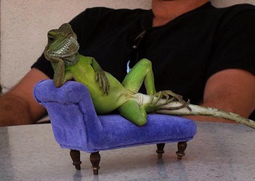 A Lounge Lizard's Reality (1/3)